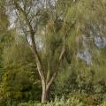 20120927-img_5032-e-k